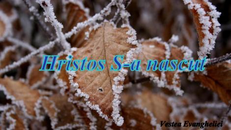 wallpaper-peisaje-iarna