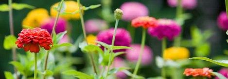 Florile au nevoie şi de răcoarea nopţii